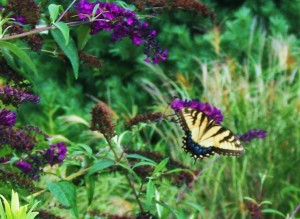 Northampton Township Butterfly Memory Garden